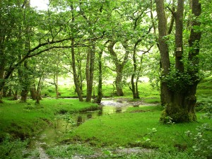 British Woodland being boosted by The Woodland Trust