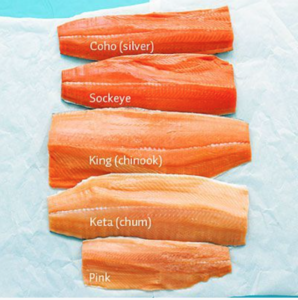 The varied colours of wild salmon.